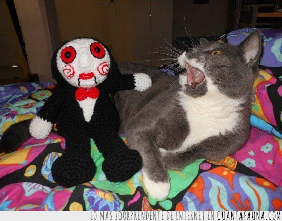 Gato,miedo,muñeco,Saw,susto,terror