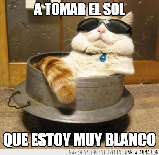 blanco,broncear,gafas de sol,gato,moreno,sol,tomar