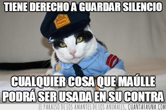 agente bigotes,derecho,gato,guardar silencio,policia,usada en su contra