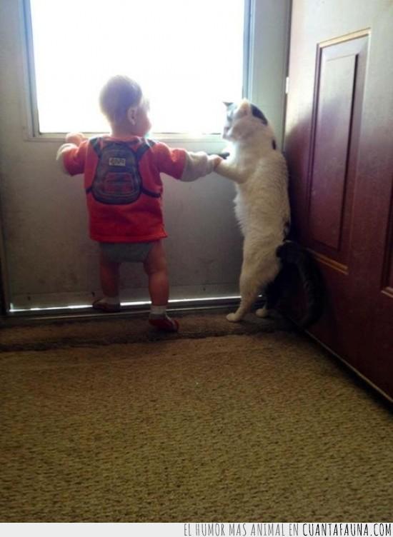 adios,amigo,bebe,gato,jugar,puerta,salir,volver