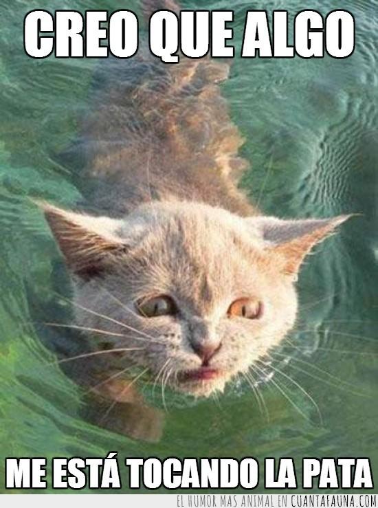agua,agua turbia,gato,pata,tocar