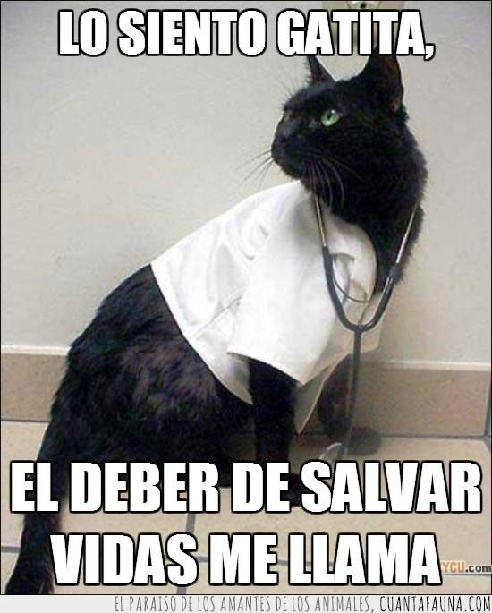 deber,doctor,gatita,gato,hipogatico,juramento hipocratico,médico