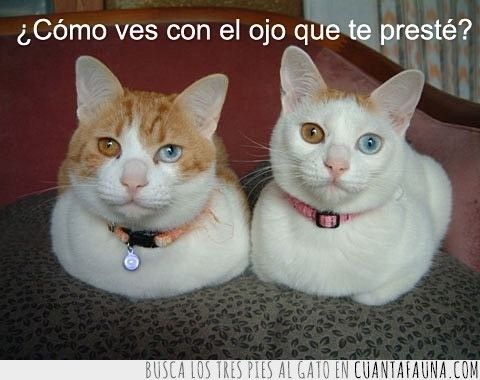 azules,cambiados,gato,ojos,rinnegan,sharingan