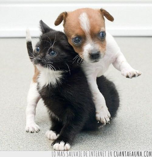 cachorro,gatito,gato,ojos azules,pequeño,perro