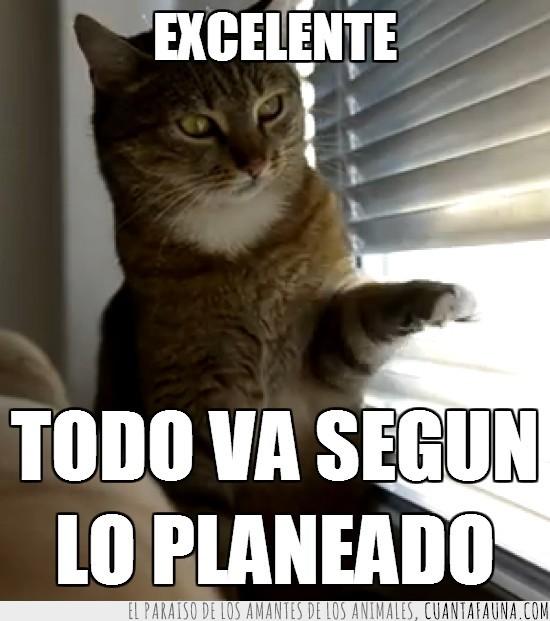 gato,malvado,pata,persiana,plan,ventana