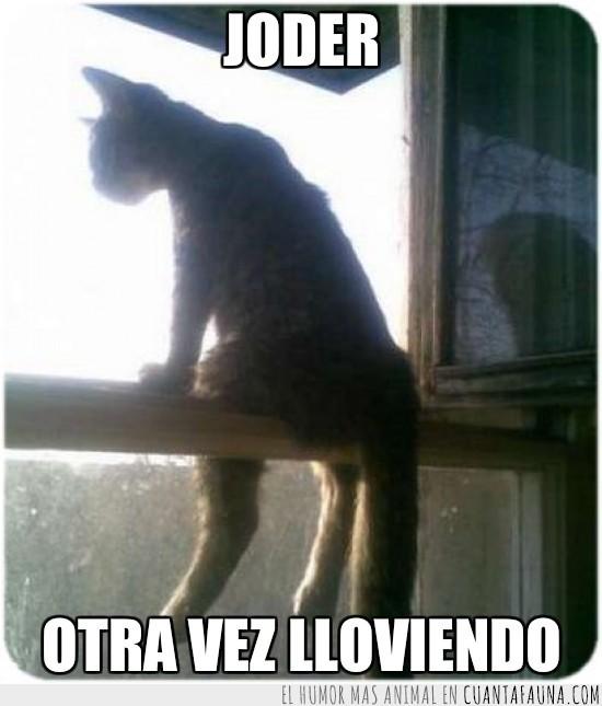 gato,lluvia,sentado,ventana