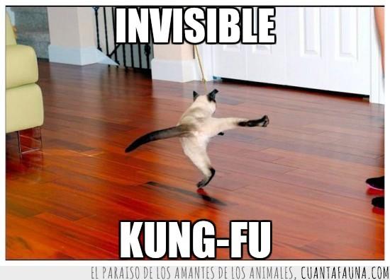 gato,invisible,karate,kung fu,patada al aire