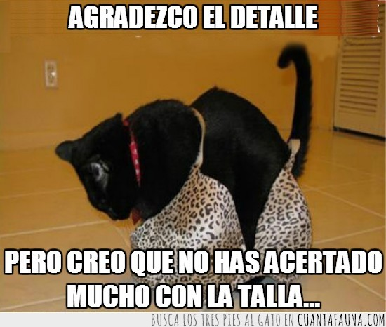 gato,leopardo,negro,ropa interior,sosten,sujetador