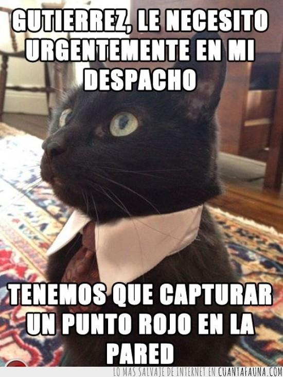 corbata,gato empresario,puntero laser,punto rojo,traje
