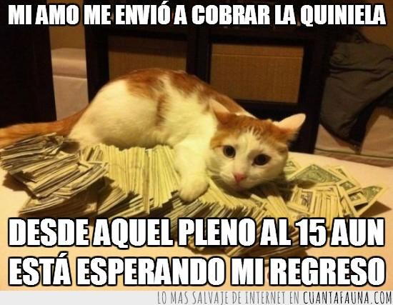 billetes,dinero,gato,pasta,pleno al 15,quiniela