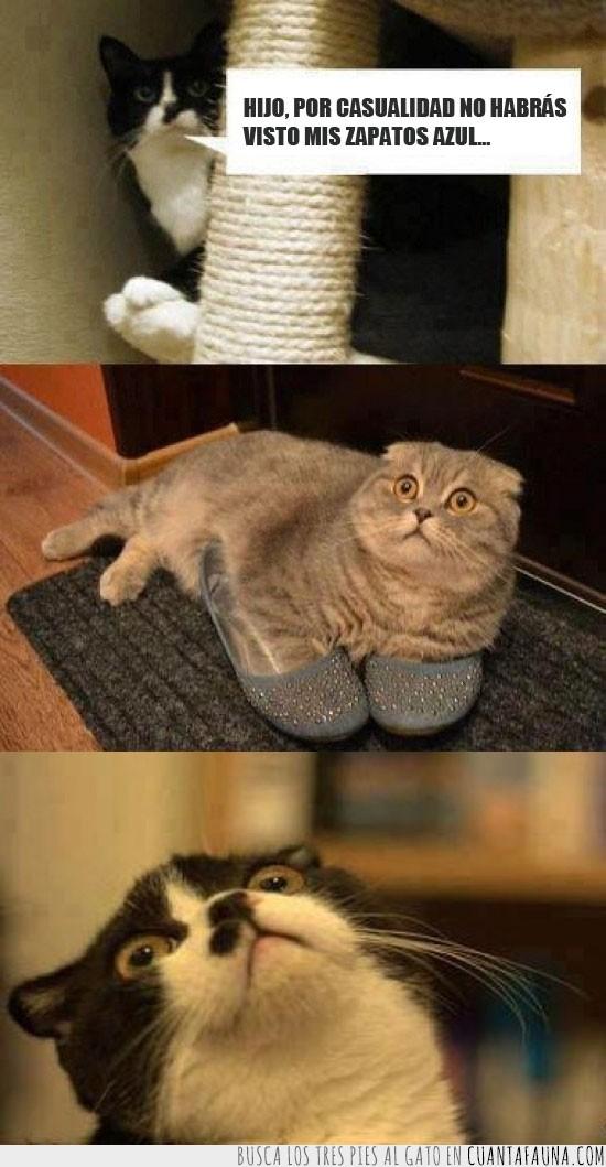 alfombra,descubrir,gato,raisins,susto,zapatos azules