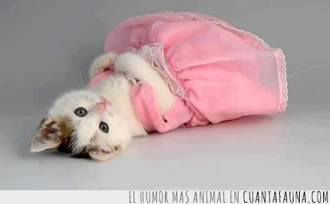 cursi,gatita,princesa,rosa,tumbada,vestido