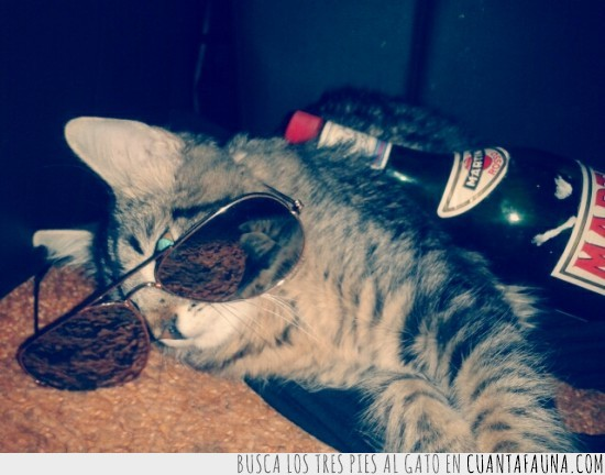 alcohol,gafas,gato,martini,resaca