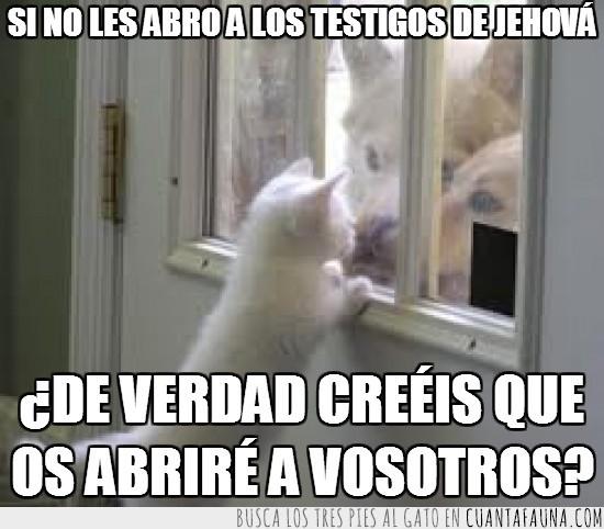 abrir,gato,perro,puerta,testigos de jehova