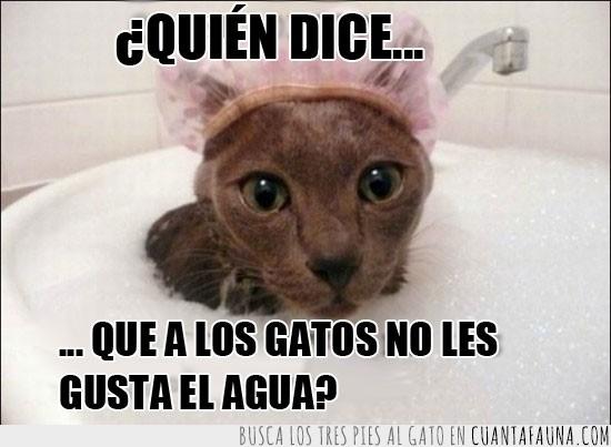 Agua,bañera,baño,burbujas,gato,gorra,lavabo,pica