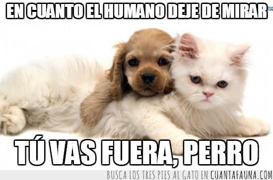 apariencias,cachorrito,cocker,dejar de mirar,fuera,gato,perro