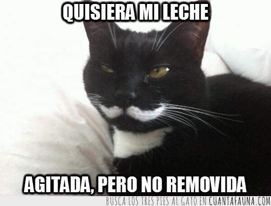 bigote,gato bond,like a sir,negro