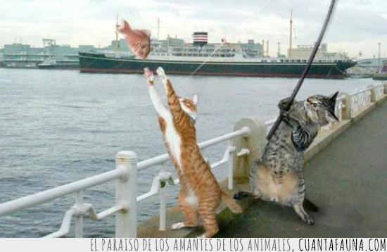 agua,barco,caña,gato,gatos,pescar,pez,volar