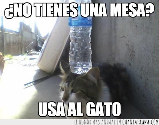agua,botella,cabeza,falta,gato,mesa,no tienes