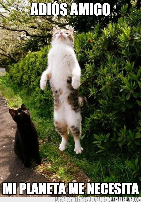 adiós,de pie,estirado,gato,irse,necesita,planeta,volando