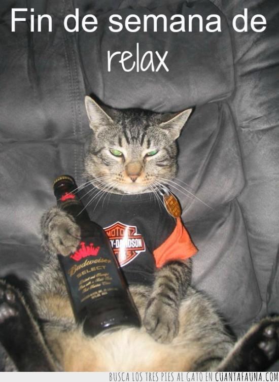 botella,cerveza,harley davidson,relax,sofa,tranquis