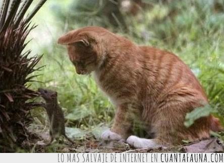 despistar,Gato,perder,perseguir,raton