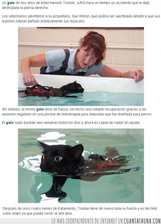 accidente,aquaterapia,gato,hidroterapia,nadando,pierna destrozada,recuperación