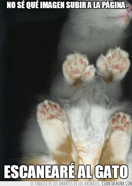 cenital,desde abajo,escaneado,escaner,gato,imagen,pagina