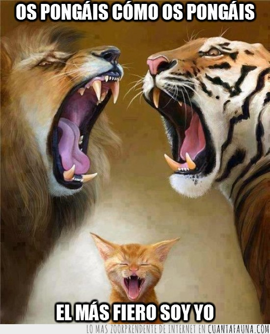 fiero,gato,leon,mas,maullar,rugir,tigre