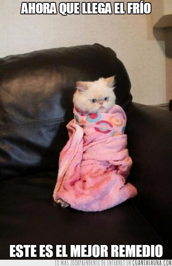 abrigado,frio,gato,manta,sofa,tapado