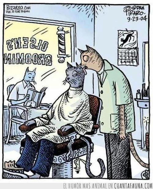 barberia,comic,gatos,pelo,peluqueros