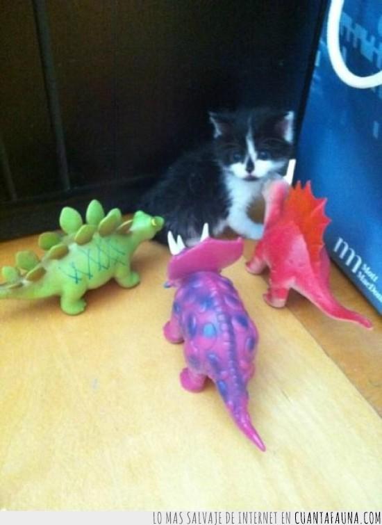 colores,dinosaurios,gato asustado,muñecos,que me lo como
