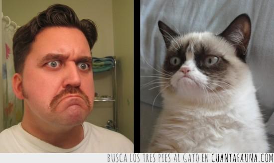 dueño,gato,gato gruñon,grumpy cat,iguales,mascota,parecidos