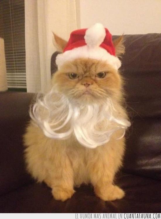 gato de santa klaus,gato enfadado,navidad,papa noel,santa