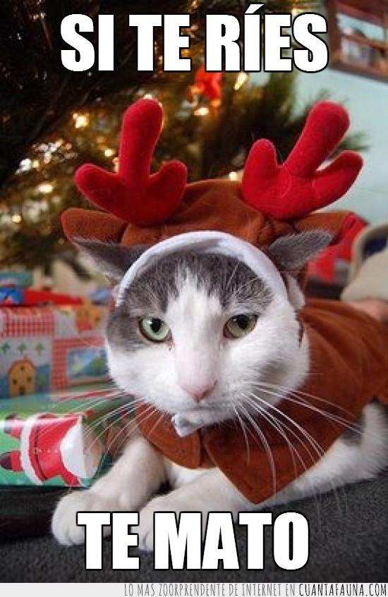 disfrazado,enfadado,gato,gracioso,navidad.reno,no le hace mucha gracia