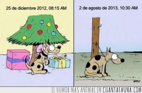 abandonar,diciembre,julio,Mascota,navidad,perro