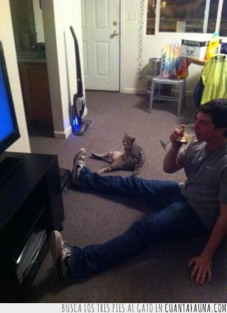 dueño,gato,parecido,television