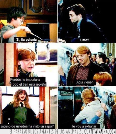 adultos,harry potter,hermione,niños,ron,sapo,tren