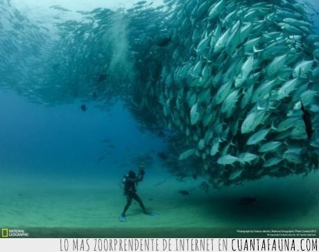 agua,bajo,banco,buzo,fotografo,mar,oceano,pez,tornado