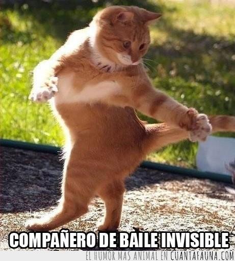 baile,compañero,gato,invisible,tango