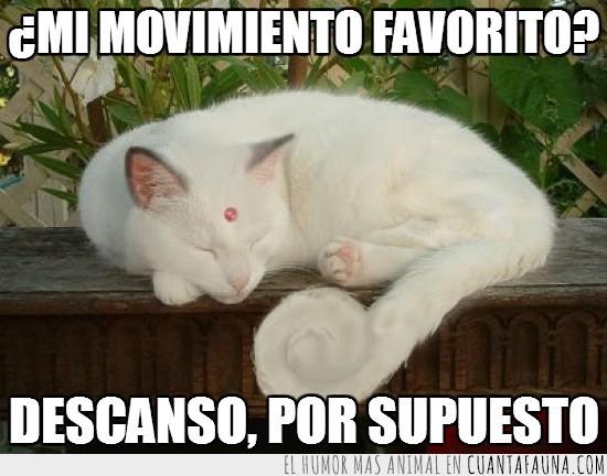 Descanso,Dormir,Gato,Movimiento,Parecido,Persian,Pokémon
