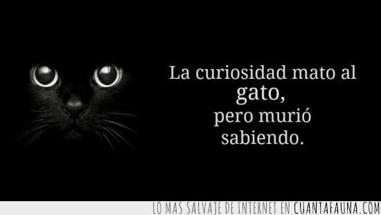 cita,curiosidad,gato,mato,muerte,murio,sabiendo