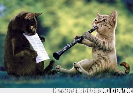 clarinete,flautista,instrumento,interpretar,musical,notas,oboe,partitura