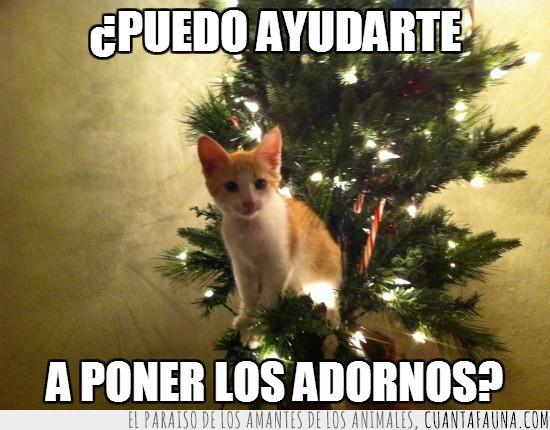 abeto,adornos,arbol,ayudar,gatito,navidad