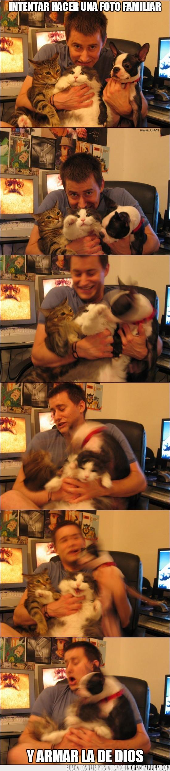 follon,foto de familia,gatos,pelea,perro