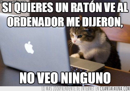 gatos,mac,macbook,ordenador,portatil,ratón