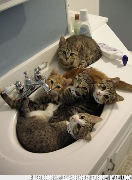 baño,camada,lavabo,lavamanos,ocupacion,pica