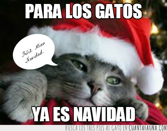 feliz navidad,Gatito,gorro,Navidad,navideño