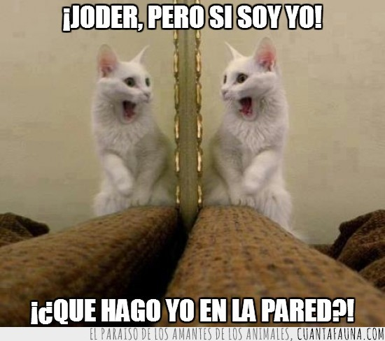 espejo,gato,gemelos,joder,sorprendido,susto