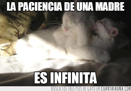 cachorro,infinita,madre,morder,oreja,paciencia